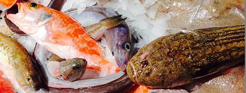 Pescado fresco para restaurantes de Barcelona